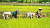 Bank Dunia Apresiasi Perkembangan Sektor Pertanian Indonesia